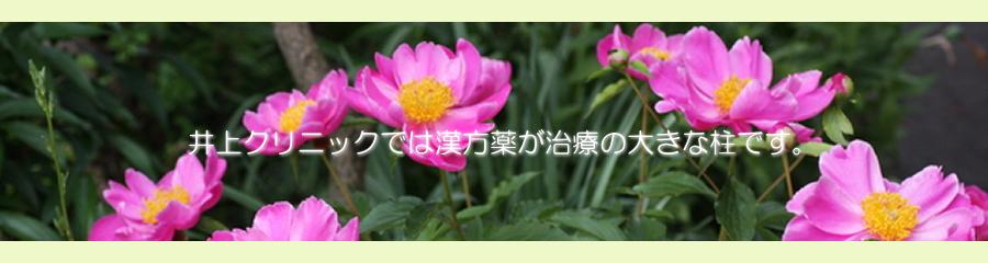 大阪市都島区「京橋駅」から徒歩3分の自然堂井上クリニックは漢方内科(漢方全体)の医院です。各種健康保険を取り扱っております。煎じ薬やエキス剤など健康保険で処方いたします。